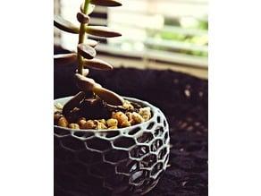 Panaloi - A succulent pot