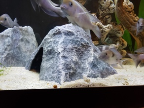 Aquarium Decoration - Textured Rock Cave - Large Tented