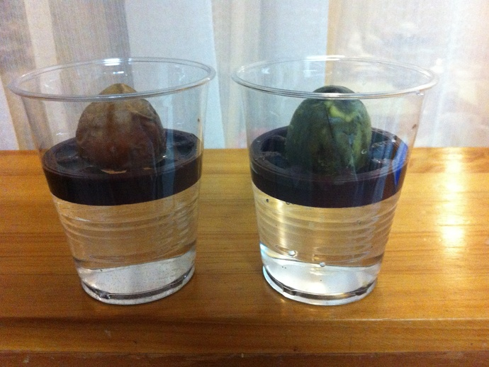 3d Print Avocado Pit Germination Holder Cup Edition By