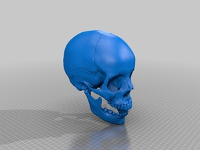 Human skull, anatomically correct and printer friendly **updated with jaw**