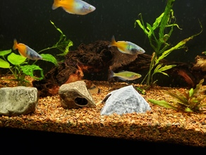 Aquarium Decoration - Textured Rock Cave - Small
