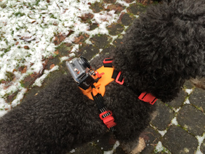 Medium Dog Camera Harness