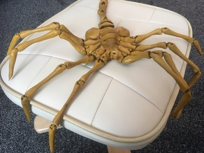 Agisis Face Hugger (simplified)