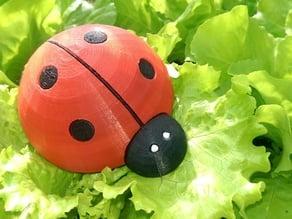 The Cute LadyBug!