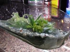 Two_Liter_Terrarium