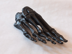 BodyParts3D Foot