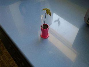 Tree seed starter Flower pot