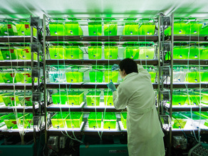Algae Biofuel Project