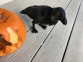 Halloween Crow (Animated)