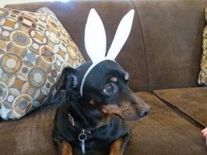 Pet-Sized Bunny Ears