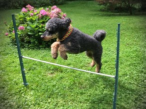 Quick Made Obstacles For Dog Agility