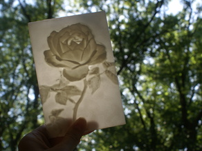 Rose More-Than-a-Lithophane