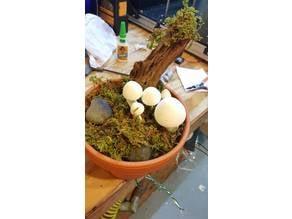 PMW Mushroom Display