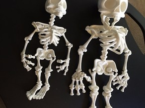 Davision3d Articulated Skeleton at 150%