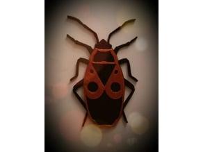 Fire Bug / Feuerwanze