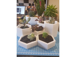 Succulent planter 1000's of variations
