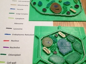 Plant and Animal Cell