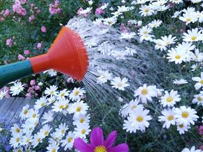 Parametric sprinkle nozzle for watering can