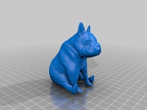 French bulldog sitting with trousers