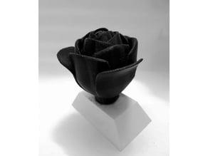 dual color rose trophy