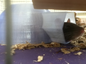 Rat Igloo