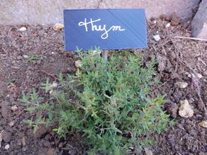 Etiquette for the garden / Etiquette pour le jardin