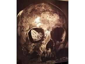 Butterfly in Skull Lithophane