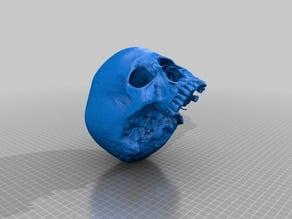 Human Skull (3D Scanned)