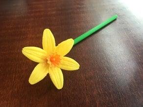 Spring Narcissi