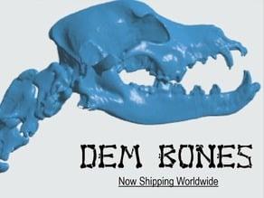 Canine (dog) Bones - Skull & Spine