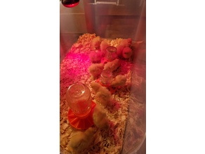 Baby Chick Waterer for Mason Jars Safety Drown Resistant