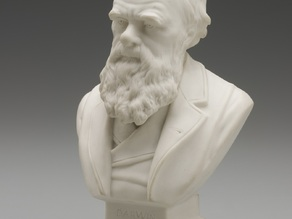 Bust of Charles Darwin, c.1899