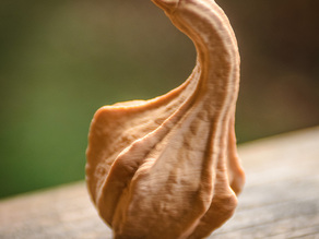 Winged Gourd
