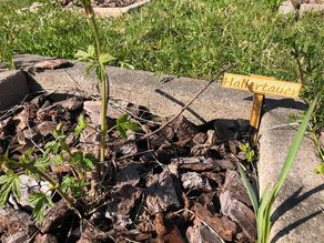 Hop Plant Pot Sign