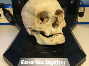 3D scanned Real Skull