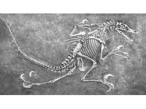 Velociraptor Dinosaur Fossil (Complete)