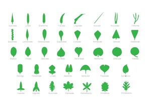 Montessori complete botanical set: 12 puzzles and botany cabinet complete of 38 leafs for laser cut