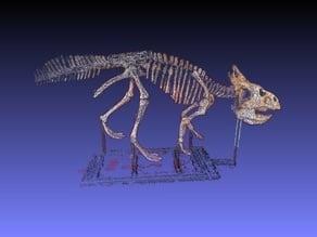 Protoceratops at the ROM