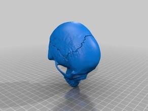 MakerBot's Human Skull - merged skull