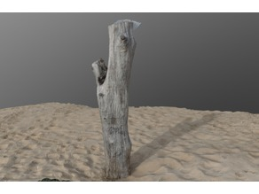 Tree Stump on the beach