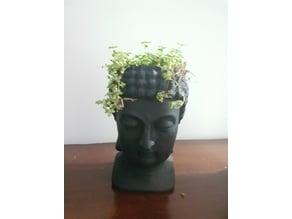 Buddha pot plant cilindrical