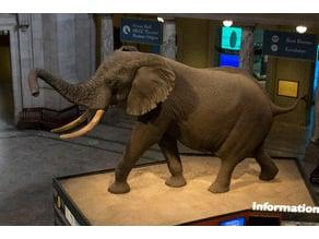 Elephant in the Rotunda