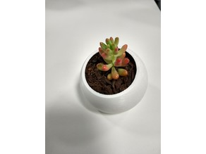 Succulent Pot - Angled Dome