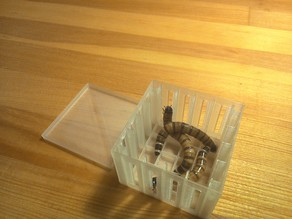 parametric insects  box