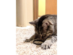 Cheapest Cat Toy - Ring