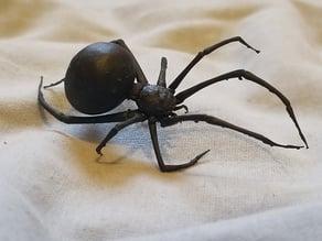 Detailed Spider + Web