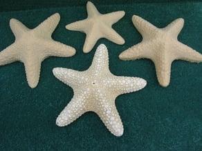 A Dried Starfish