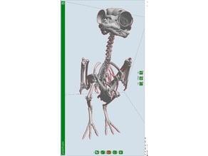 Porg Skeleton