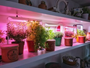 Plant Indoor growing LED Pot-Lamp