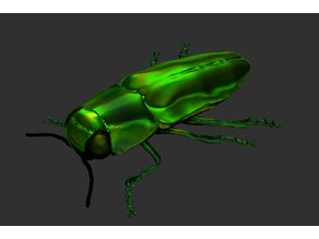 Metallic wood-boring beetles (Anthaxia)